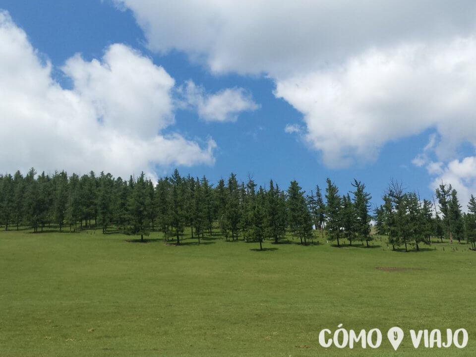 Bosques de Mongolia