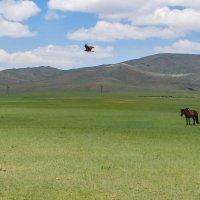 Naturaleza salvaje de conocer Mongolia