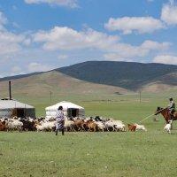 Familia nómade con sus animales en Mongolia