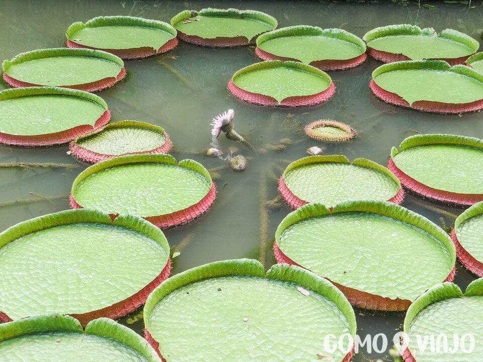 Jardines Botanicos de Singapur