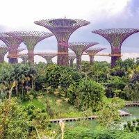 Gardens by the Bay en Singapur en cosas que ver en Singapur
