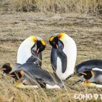 Parque Pingüino Rey en Tierra del Fuego