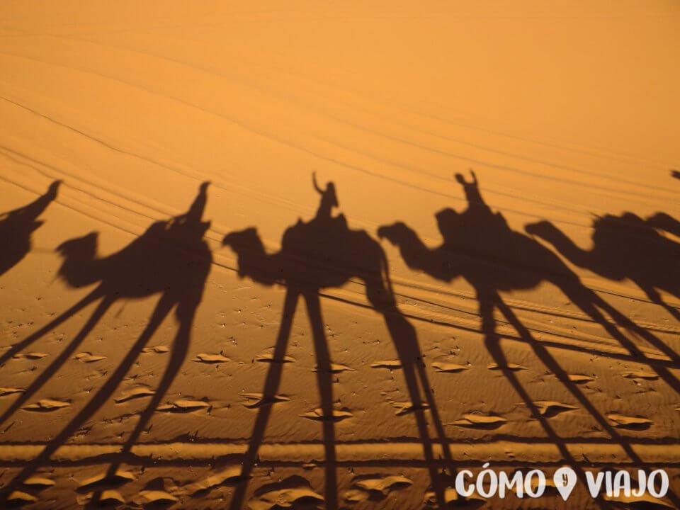 Excursión en camello al Desierto del Sahara