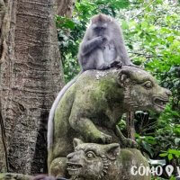 Monkey Forest en Ubud, Bali
