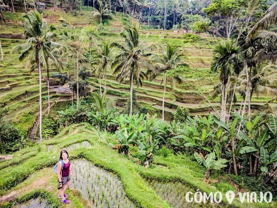 Terrazas de arroz Tegallalang